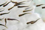 Воспроизводство акваресурсов